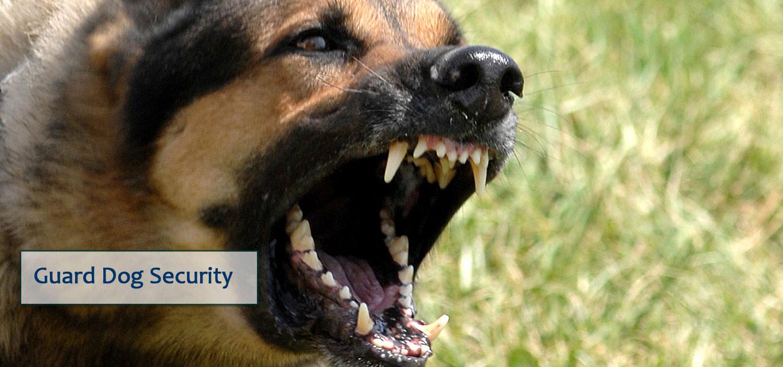 guard dog security
